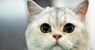 خطأ قطة ثمنه 40 ألف دولار