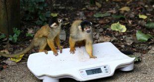 بالصور: كيف تقيس حديقة حيوان في لندن صحة الحيوانات ؟