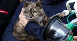 خدمة الإطفاء تستخدم أقنعة أوكسجين خاصة للحيوانات الأليفة التي تنقذها من الحرائق