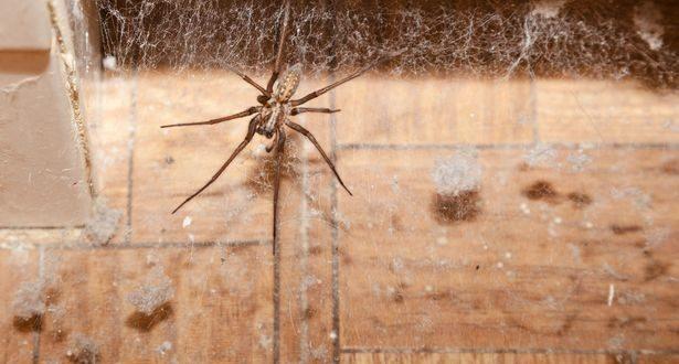 كيف يمكنك التخلص من العناكب التي تتسلل إلى منزلك ؟