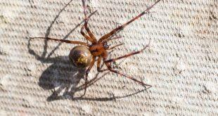 انتشار العناكب يمنع آلاف الطلاب من الذهاب إلى المدارس