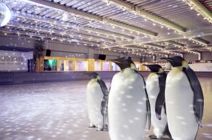 الآن يمكنك الذهاب للتزلج على الجليد مع طيور البطريق الحقيقية في لندن