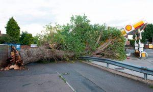 بالصور: العواصف في لندن تتسبب في سقوط شجرة على محطة وقود
