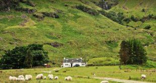 البريطانيون يتوجهون للمناطق الريفية هرباً من كورونا والحكومة تدعوهم للعودة